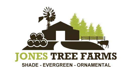 Jones Tree Farms
